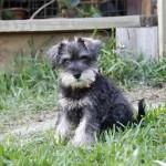 Sol Pup 2